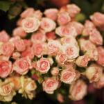 Kwiaciarnia Zielony Zakątek - sklepy w CH Huta