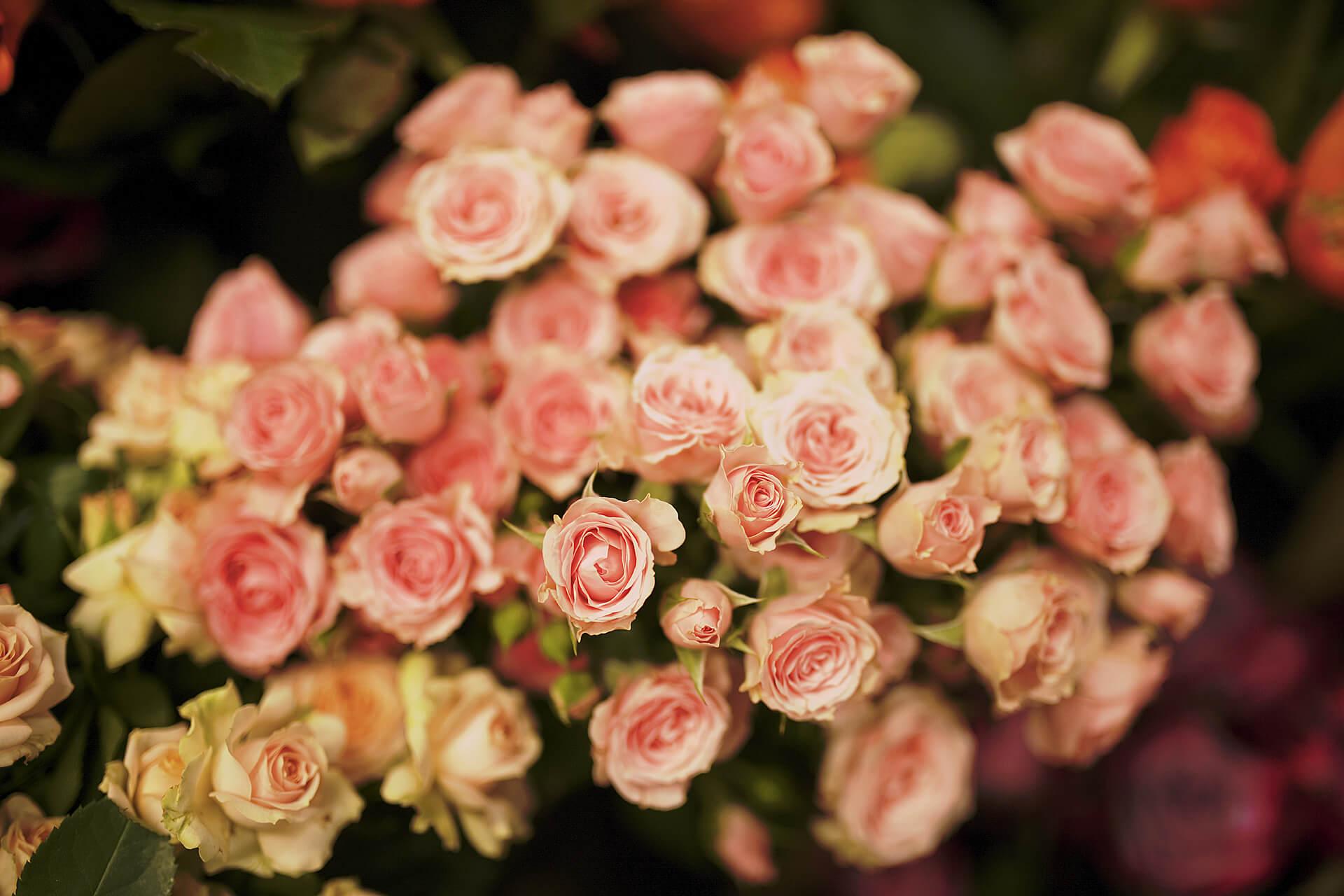 Zielony Zakątek – kwiaciarnia